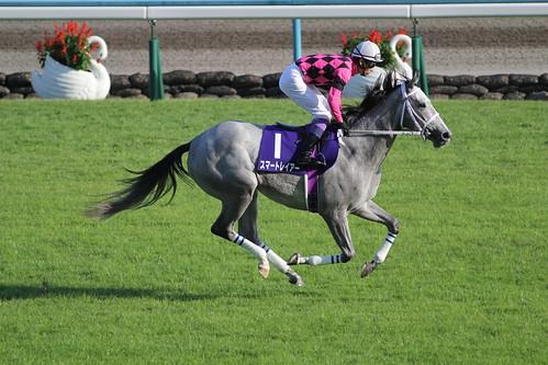 スマートレイアー 返し馬