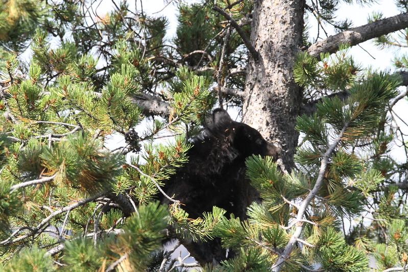bear IMG_6233
