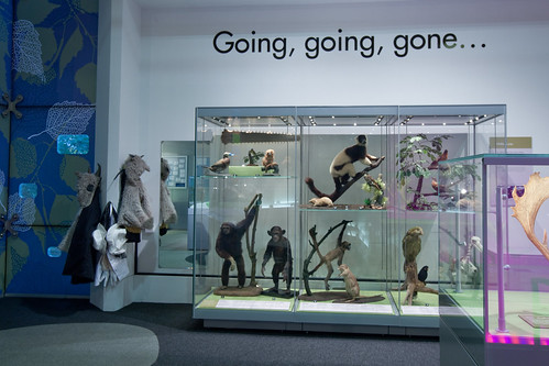 What on Earth gallery at Weston Park Museum. Image © Andy Brown | by Museums Sheffield