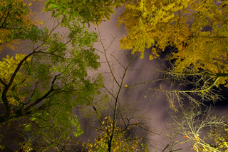Gingko Trees at Night | by Chea Phal