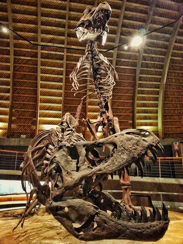 #rex #dinosaurios #colunga #museo #huesecitos