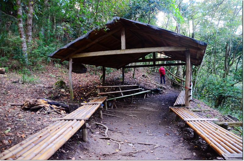 司馬庫斯往巨木區步道香菇亭