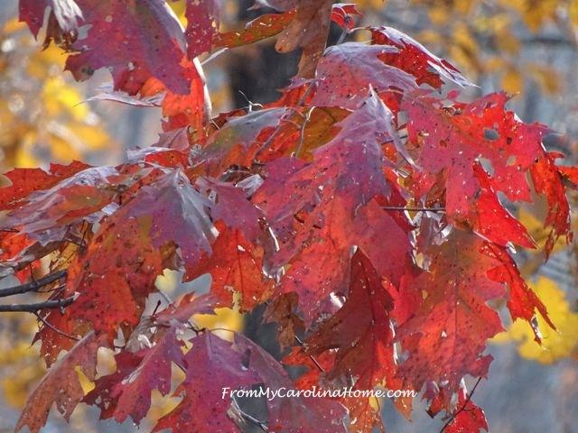 Autumn 2016 November 5