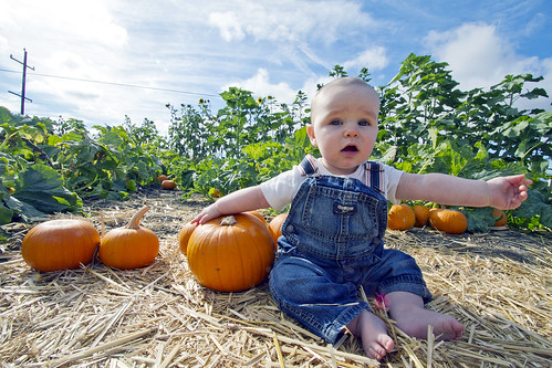 I want a pumpkin this big | by The Spohrs Are Multiplying...