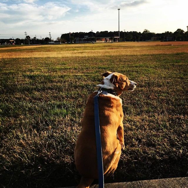 Because there's been too much pie and napping in my life I took the dog for a little jaunt. #dogs #doglife #muttsofinstagram #petsofinstagram #pets • • • • • #webeatfat #fitfluential #sweatpink #fitspo #fitness #health #fit #healthy #workout #loseweight