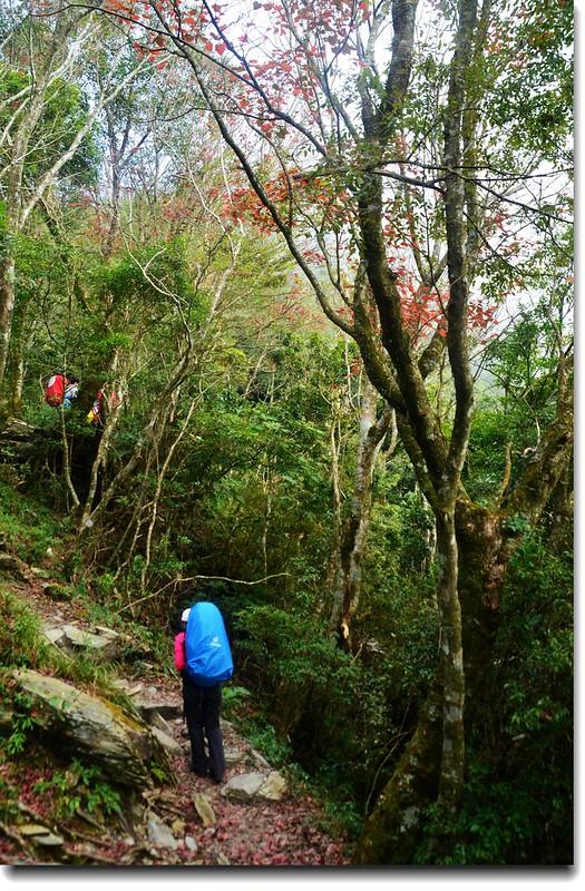 北大武山登山步道 9
