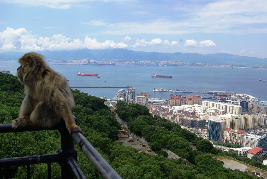 View of Gibraltar with barbary ape