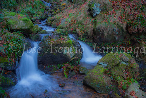 Parque Natural de Gorbeia   #DePaseoConLarri #Flickr      -2775