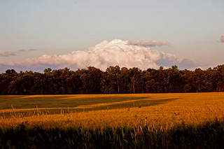 cloud bank over wheat field at sunset a | by The Drive-by Shooter