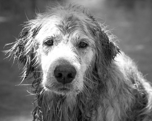 Wet Dog | by Citizen 4474