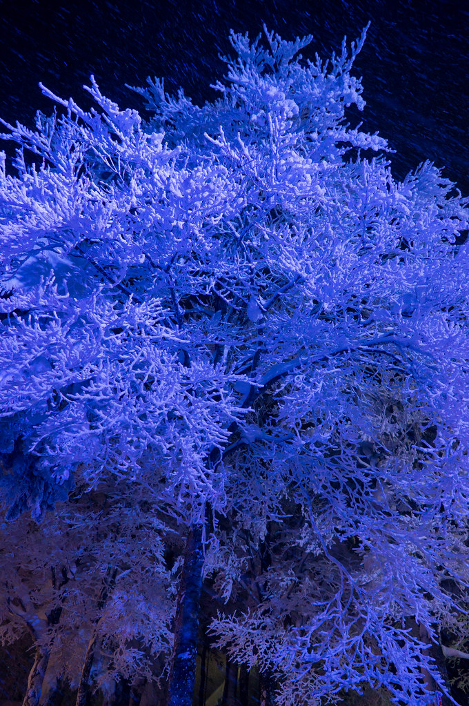 blue tone mt zao silver frost lighting 蔵王樹氷ライトアップ the