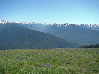 041 Hurricane Ridge