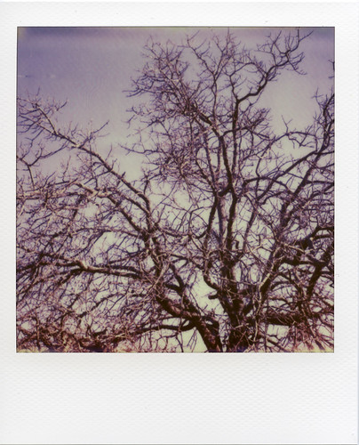 Impossible px70 shot with sx-70 sonar.       http://www.daniellebourland.com/analog-journal-vol-1/ | by daniellebourland