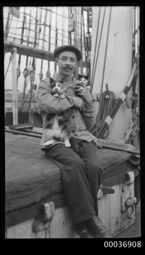 Seaman with a cat and kitten, c 1910 | by Australian National Maritime Museum on The Commons