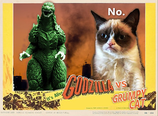 Meet Grumpy Cat Video
