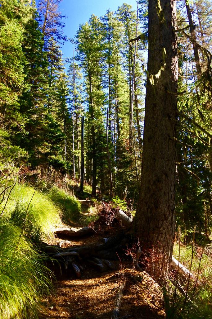 Cabin Lake trail 10