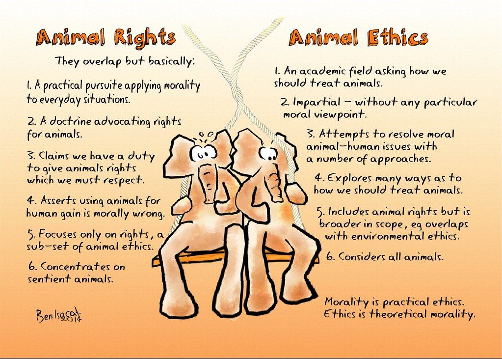 animal rights versus human rights