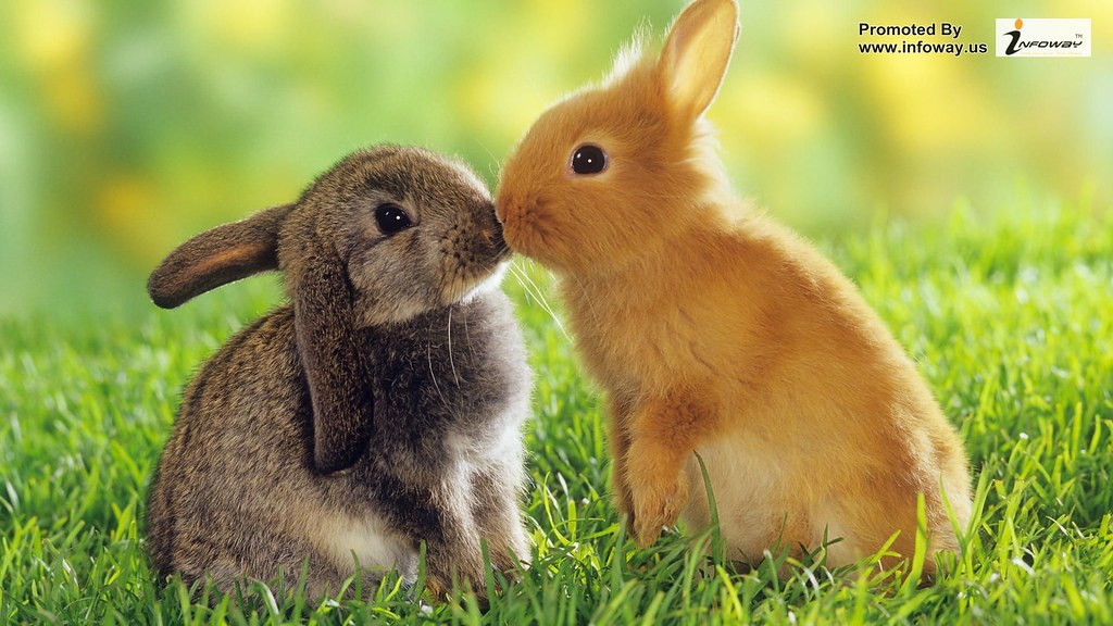 Cute Animals Wallpaper