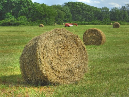 Mid summer hay bales | by mgstanton