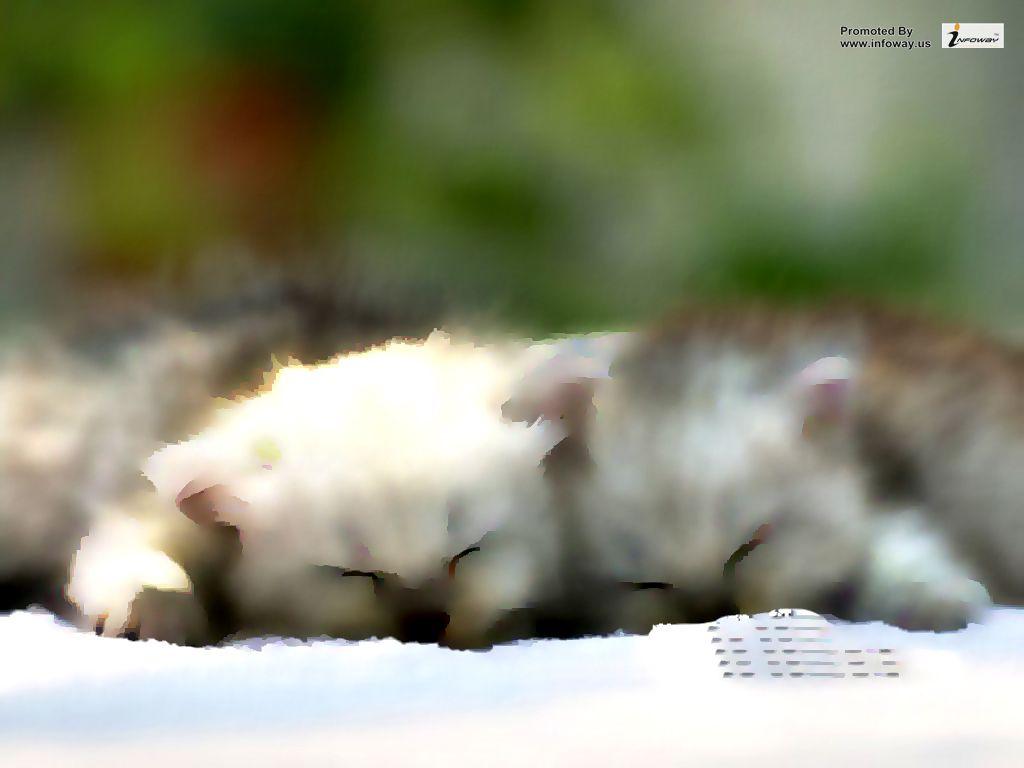 Cute Cat Wallpaper Cute Cat Wallpaper Billi Bouden Flickr