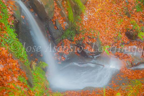 Parque Natural de #Gorbeia #DePaseoConLarri #Flickr      -1998