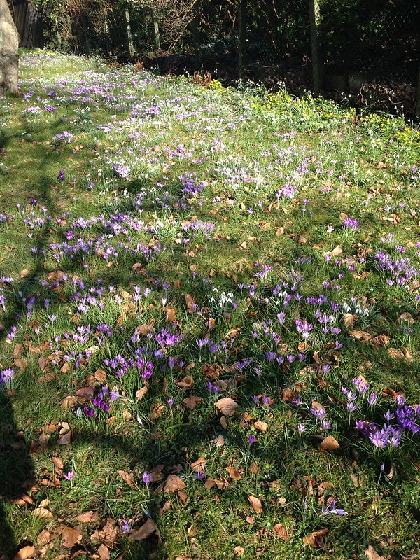 first signs of spring, helsingborg