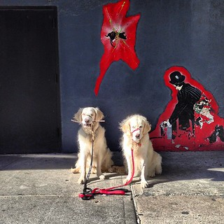 Occasional Street Art Dogs | by epc