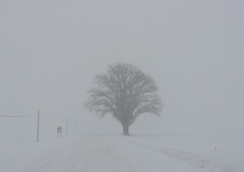 Fading Shadows in the Snow | by GollyGforce - Living My Worst Nightmare