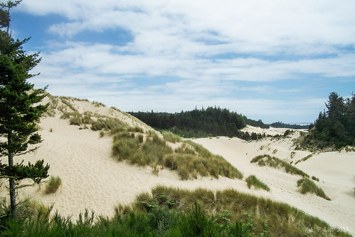 Dunes Being Reclaimed | by A. F. Litt