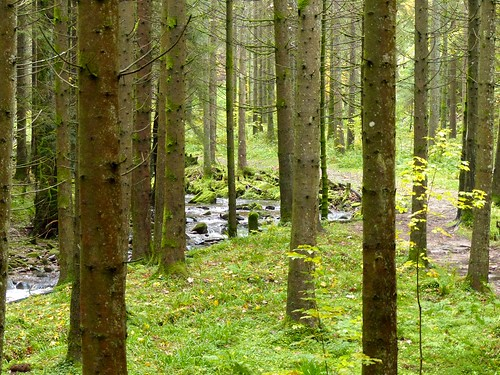 Black Forest: stream | by romanboed
