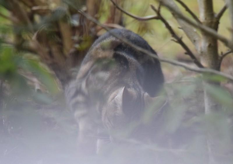New Cat 04.12 (2)