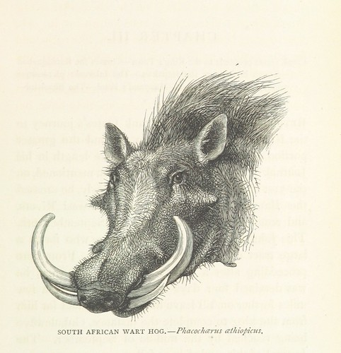 Image taken from page 103 of 'Matabele Land and the Victoria Falls. A naturalist's wanderings in the interior of South Africa. From the letters and journals of the late Frank Oates, F.R.G.S. Edited by C. G. Oates. (Memoir.)' | by The British Library
