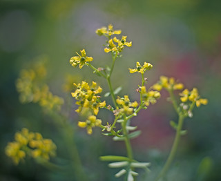 SmallFlowers | by maryland_photos