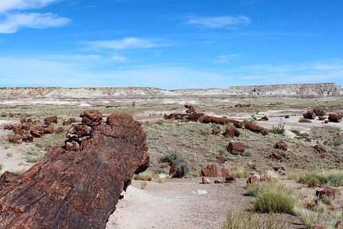 PetrifiedForest-21