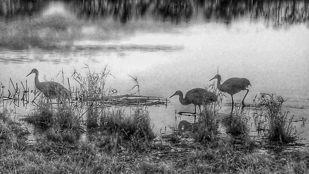 It Was Twilight And Sandhill Cranes >> Sandhills Cranes At Twilight We Saw These Cranes Tonight A Flickr