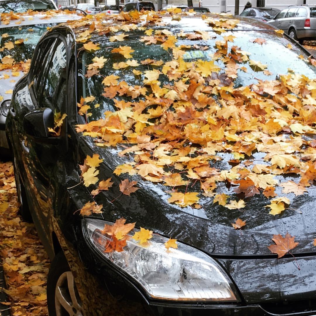 Mehr Herbst geht nicht!