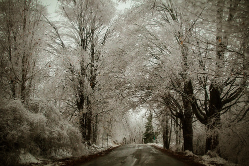 Christmas Ice Storm 2013 in Michigan - Explored | by LadyDragonflyCC - >;<