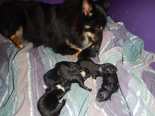 Six new puppies | by Lisa G Richards