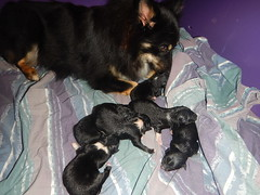 Six new puppies