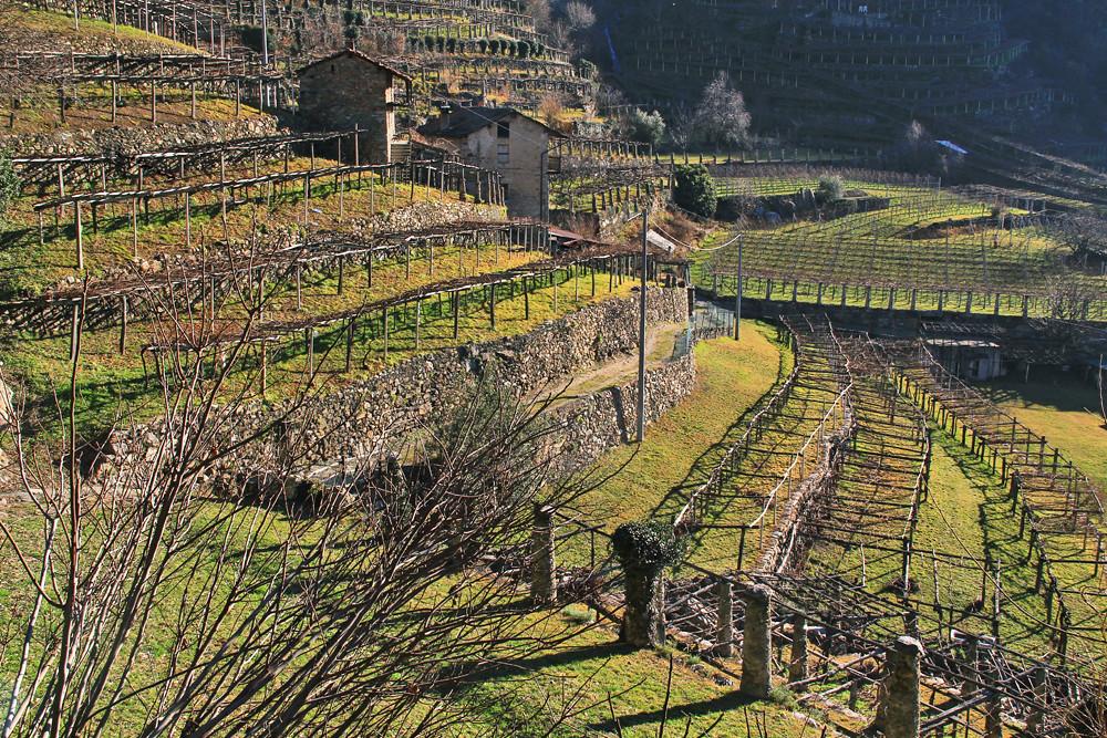 Beautiful Terrazzamenti In Collina Pictures - Modern Home Design ...