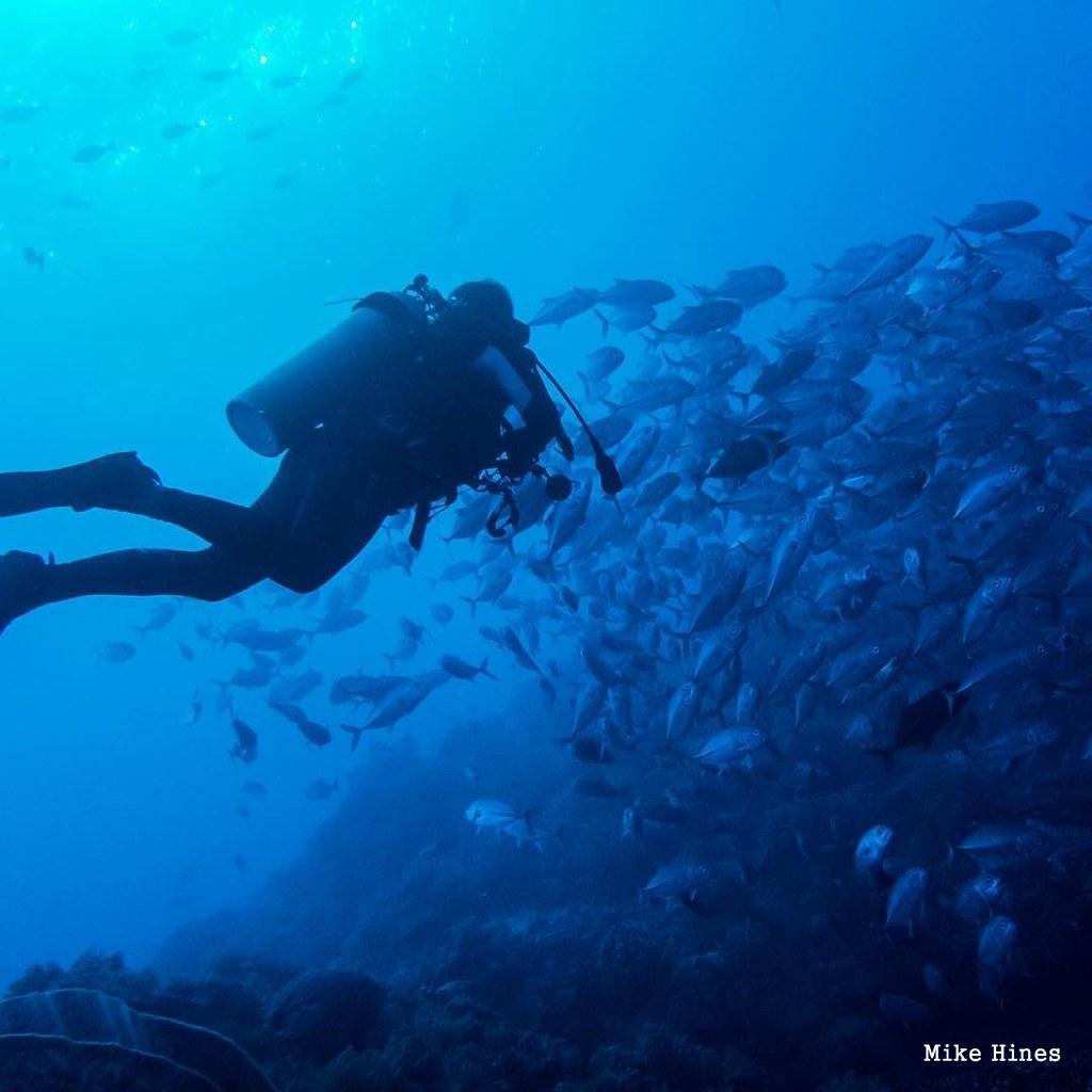 Tubbatha Reef