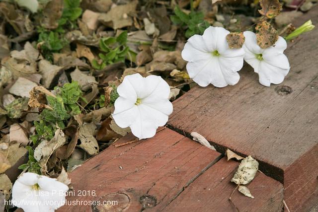 2016.10.31-Garden02