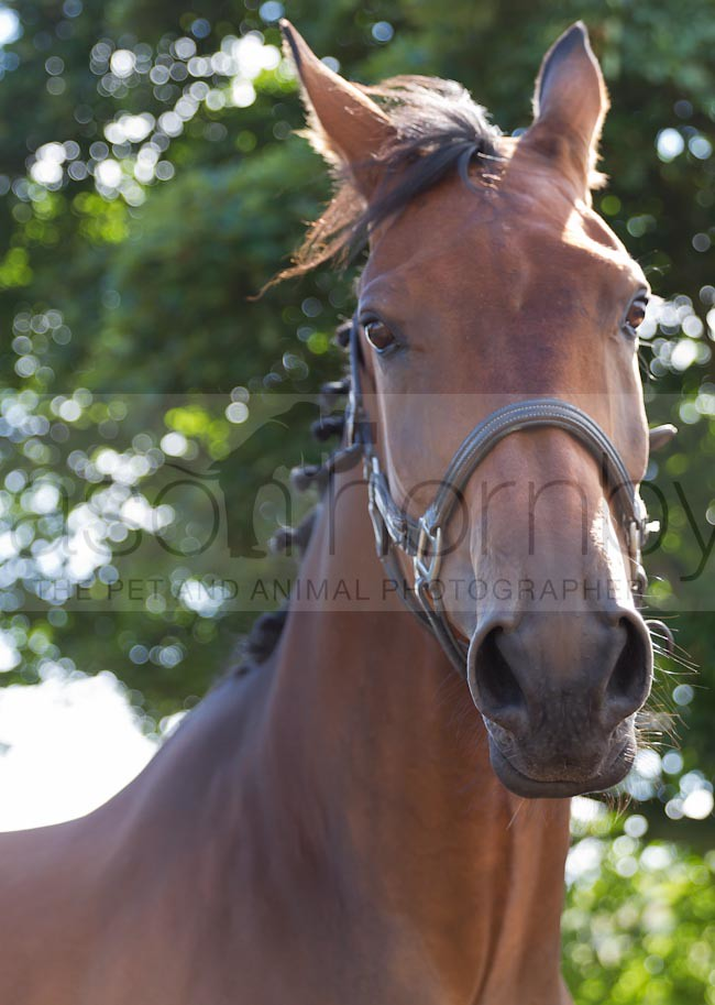 Equestrian Event Photographers Equine Photographs Animal Photographers Local Photographers Pet Photography Business