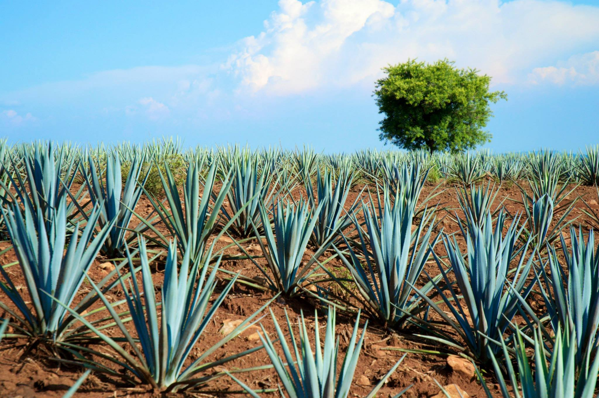 Tequila Country