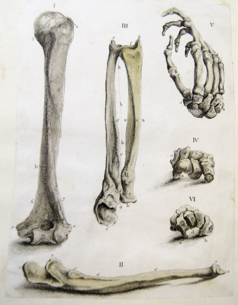 Bones of the arm, wrist and hand | Anatomical engraving of t… | Flickr