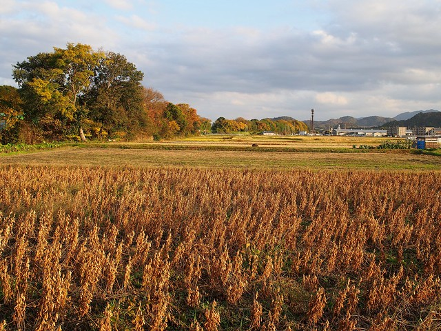 Fields in Fall