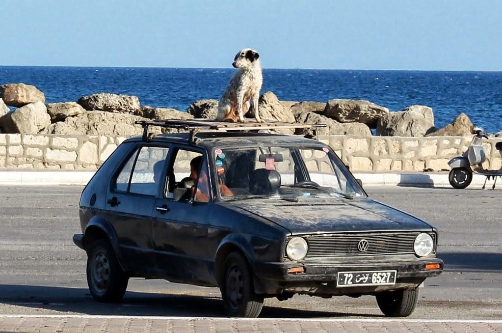 Image result for dog on car roof