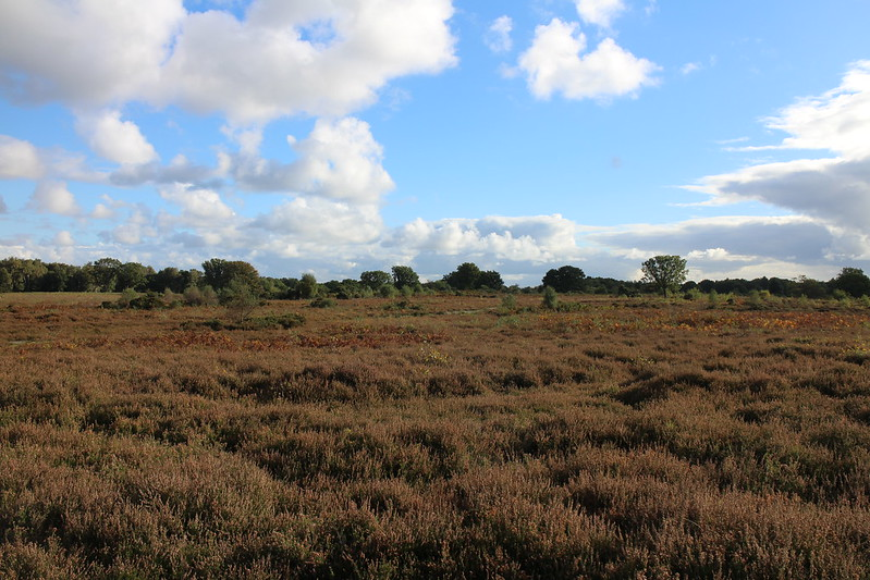 Buxton Heath with Caws