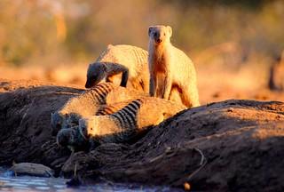 Botswana Botswana