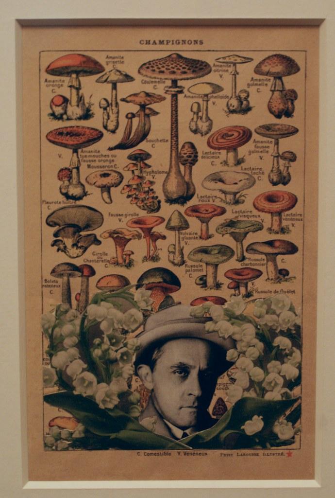 Witkacy en belle compagnie entre les champignons et le muguet.